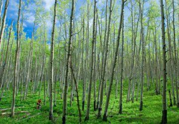 Snodgrass Spring xavi