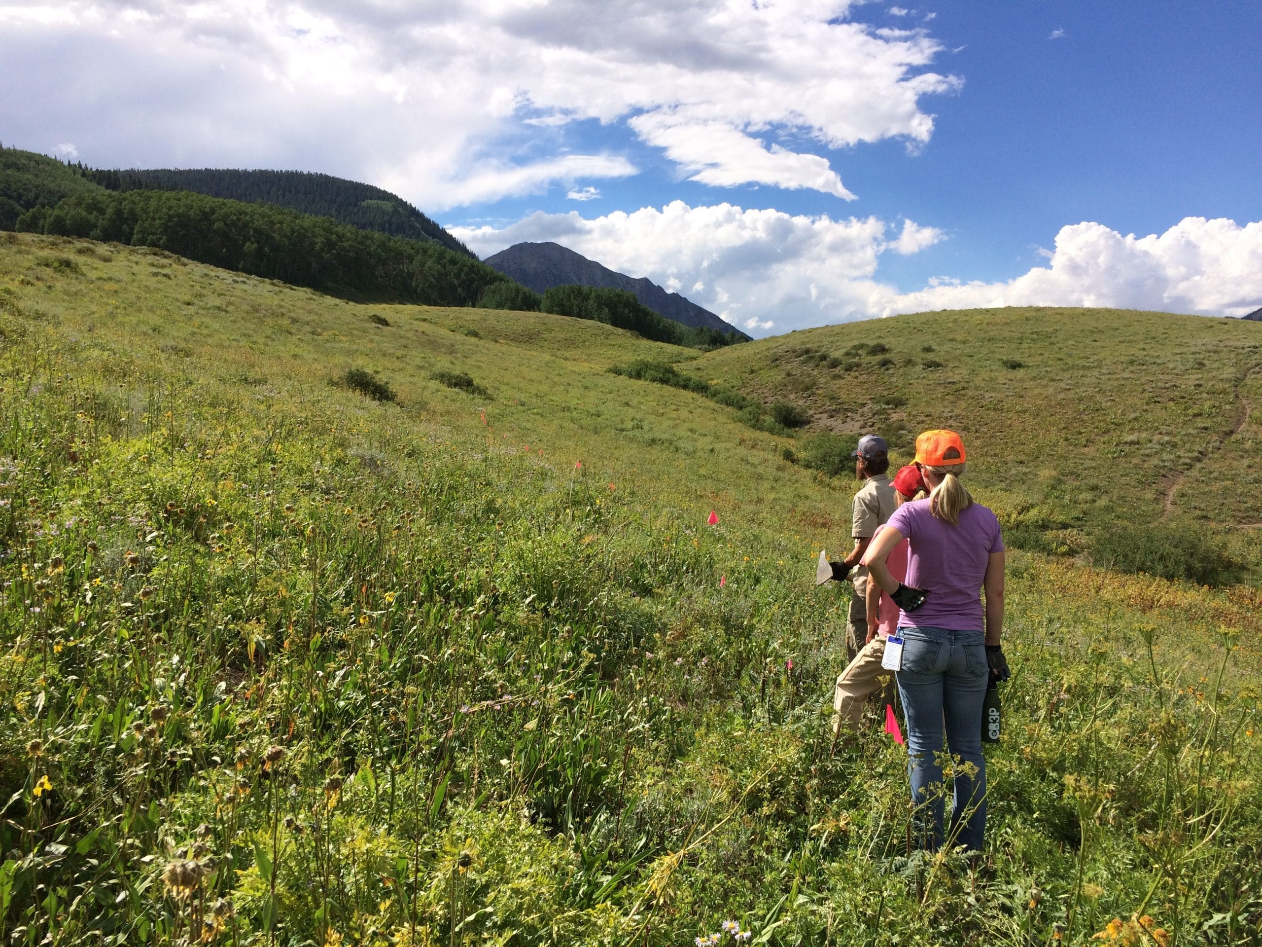 Wwf Trail Work Training Brought To You By Rocky Mountain Trees And